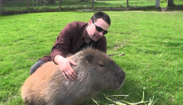 Capybara 3